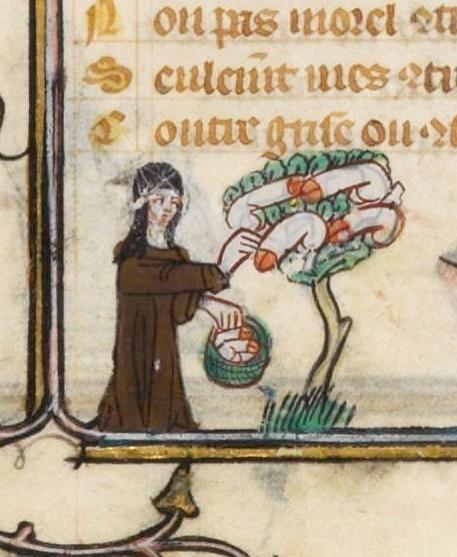 Obstlese im Mittelalter. Das waren noch Zeiten! pic.twitter.com/qaLsFt5Et9
