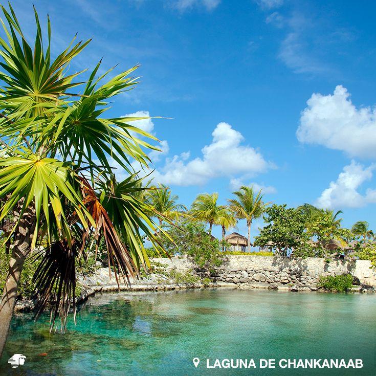 Laguna de Chankanaab, Cozumel. Quintana Roo, México.  Si estás interesado en incursionar en el buceo o ya eres un experto, este lugar es una inmejorable opción. Explora los tres túneles subterráneos que conectan a la laguna con el mar, y bucea entre mantarrayas, morenas y una gran variedad de peces.