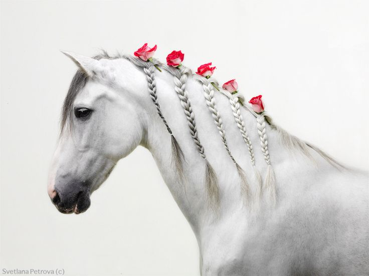 On my to-do list for when we get our mini: Braid her hair and put flowers all in it.