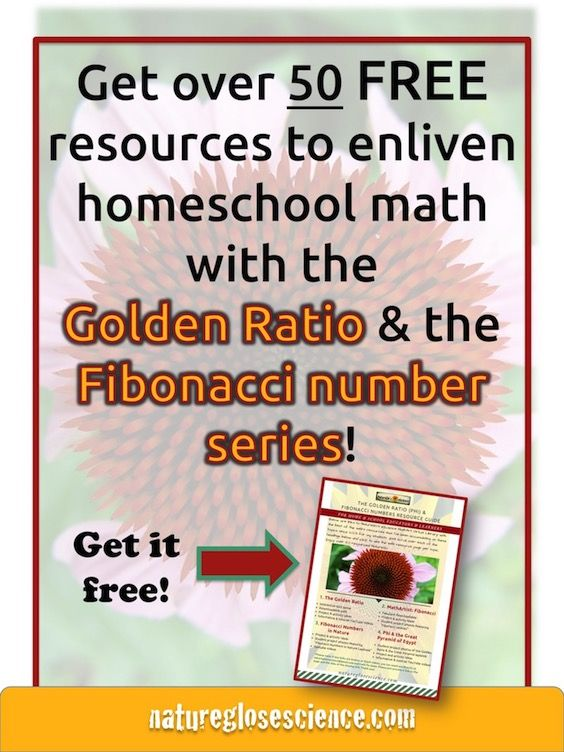 homeschool math, The Golden ratio, Fibonacci sequence in math, Fibonacci for kids, Fibonacci activities for kids, phi math, phi in math, what is phi in math, Fibonacci sequence formula, what is the fibonacci sequence, maths in nature, examples of math in nature, math found in nature, mathematics in nature examples, nature mathematics, fibonacci for kids