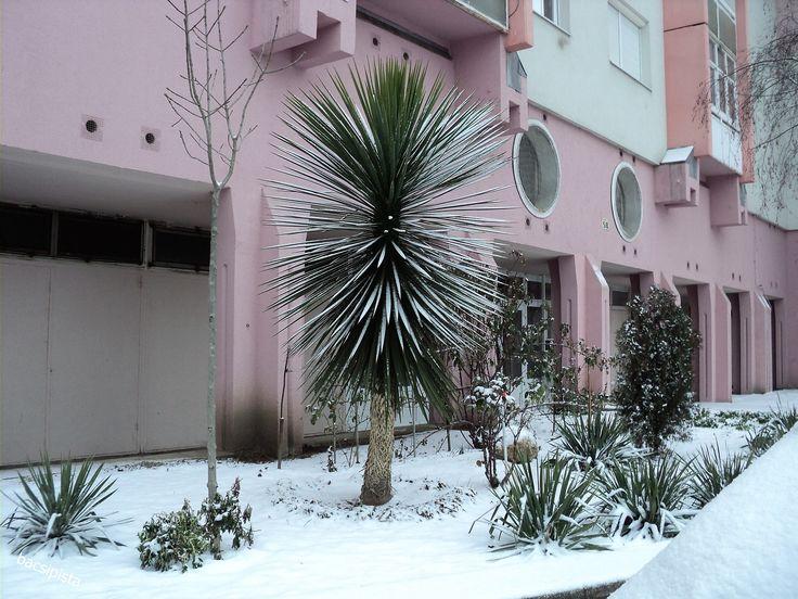 Havanna utca. Pálma a télben.