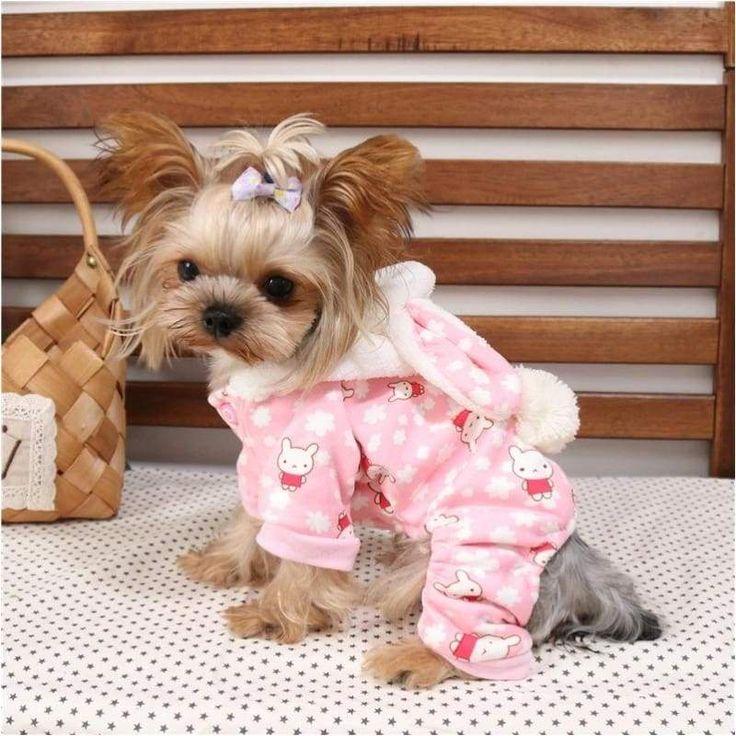 Картинки, картинки красивых собак в одежде