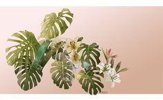 Botanic Illustration | plants