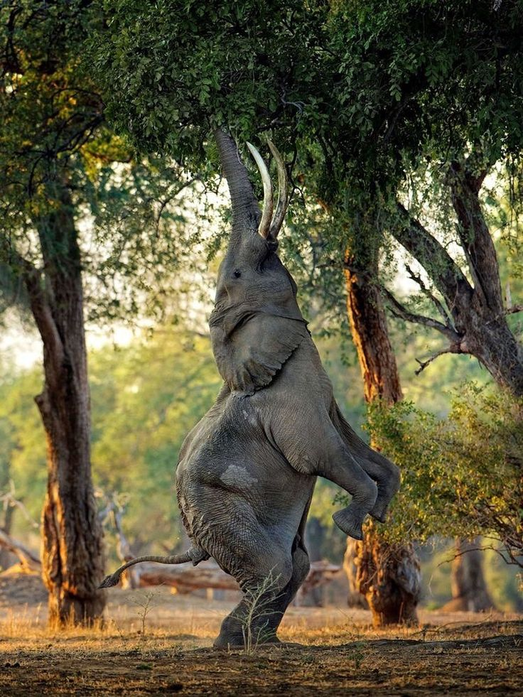 "Elephant.    (""BEAUTIFUL."")"