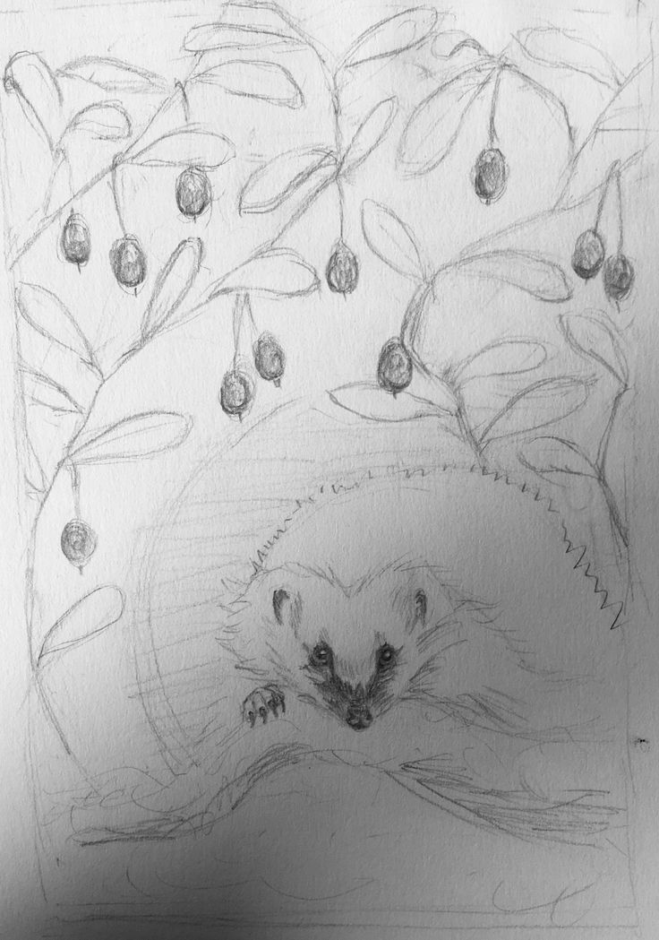 Unfinished sketch for my oil painting, bog blueberries & hedgehog. Pretty confident this will be a damn masterpiece. :D though the heghehog seems to need some fixing, the face is not quite right. Want his eyes to have defined irises, so can make them green as I'm making him otherwise a regular hedgehog, when he is actually a spirit of the forest. Meeting him is different from meeting eg the fox or the deer, but no less a blessing. Anni Vilna