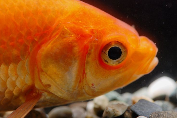 1000+ images about Fishs on Pinterest