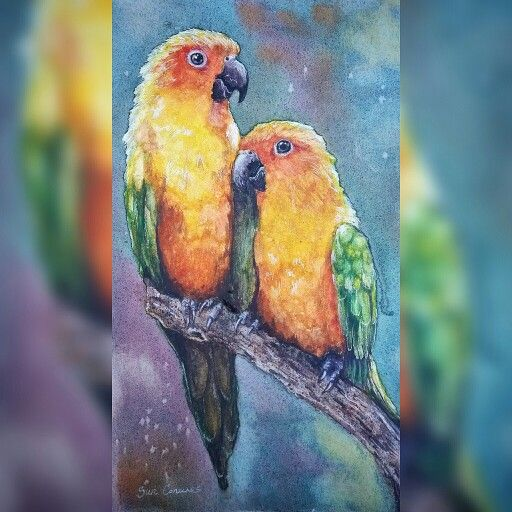 Sun Conures watercolour by Corinne Dany