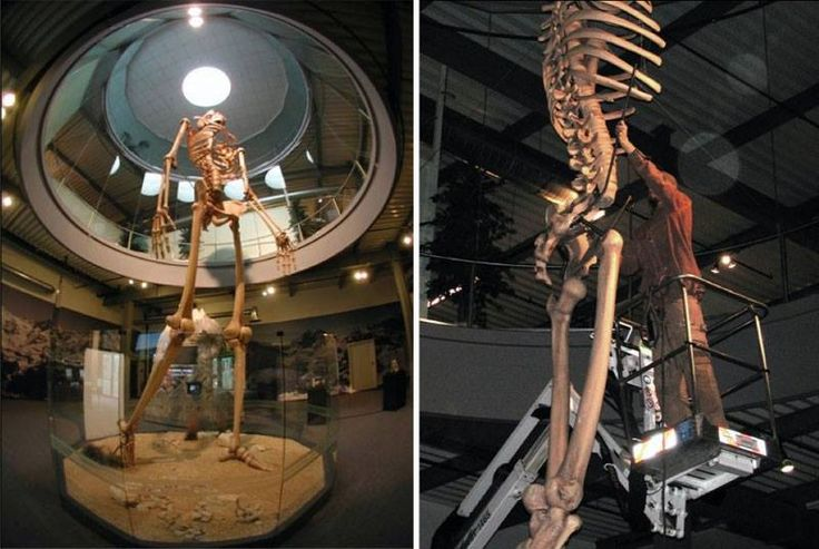 """Reconstruction of the Giant Skeleton rediscovered in Loja in Ecuador 19 October 2012. Such skeletons (this size) are discovered in many places on earth. In the bible are mentioned giants. It is obvious that they were living here long time ago. As age,  skeletons are quite """"recent"""", around 5,000 to 7,000 years ago. To me they does not  appear to be another """"human species"""". may be anomalies / mutants. Around 5,000 years ago it appears to be a turbulent period."""