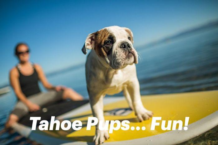 A Dog S Paradise Dog Friendly Beach Tahoe Dogs