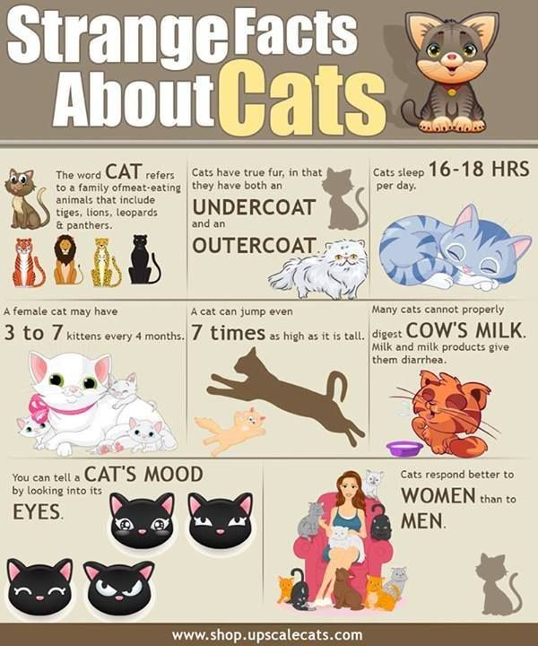 Fun facts about cats!