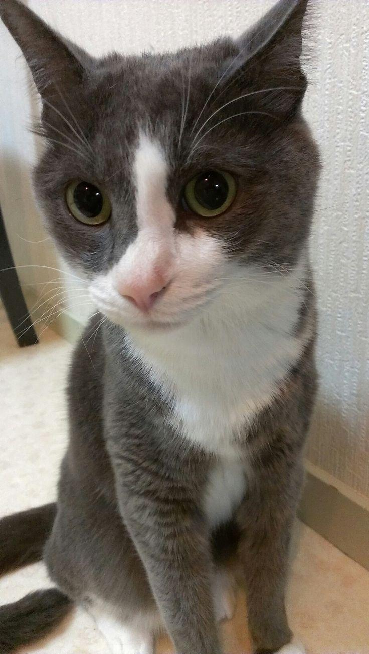 7 best cat images on Pinterest