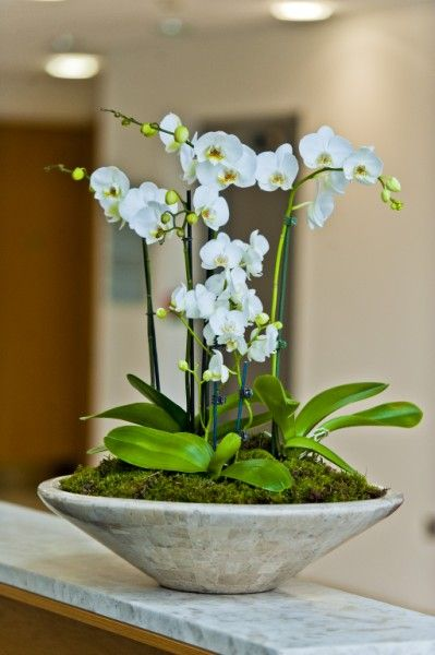 Large ceramic orchid deskbowl for reception desk Maidenhead