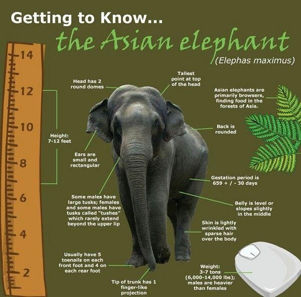 Image result for asian elephant habitat