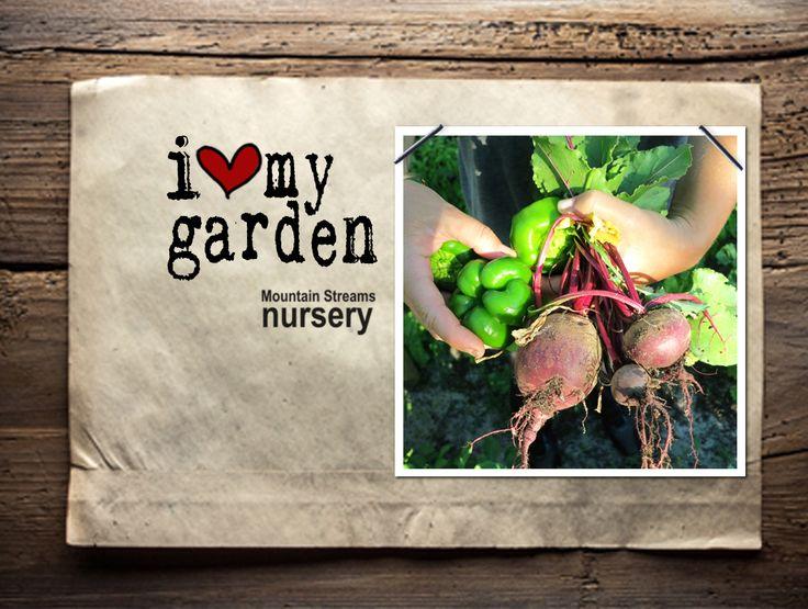 i ♥ my garden