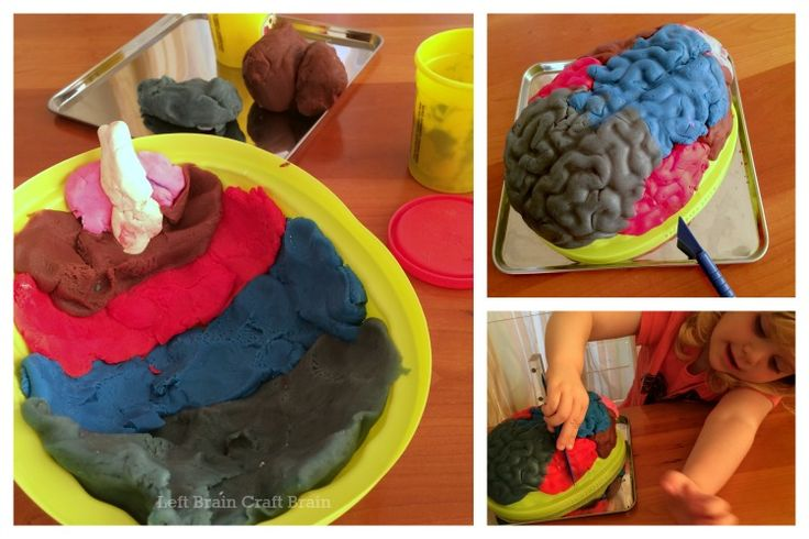 Playdough Brain Surgery - What a fun way to learn about the brain #science #kidsactivites -