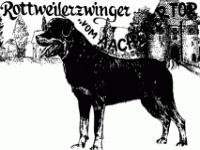 Rottweiler vom Aachener Tor