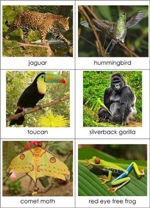 Animals & Biomes Matching Cards