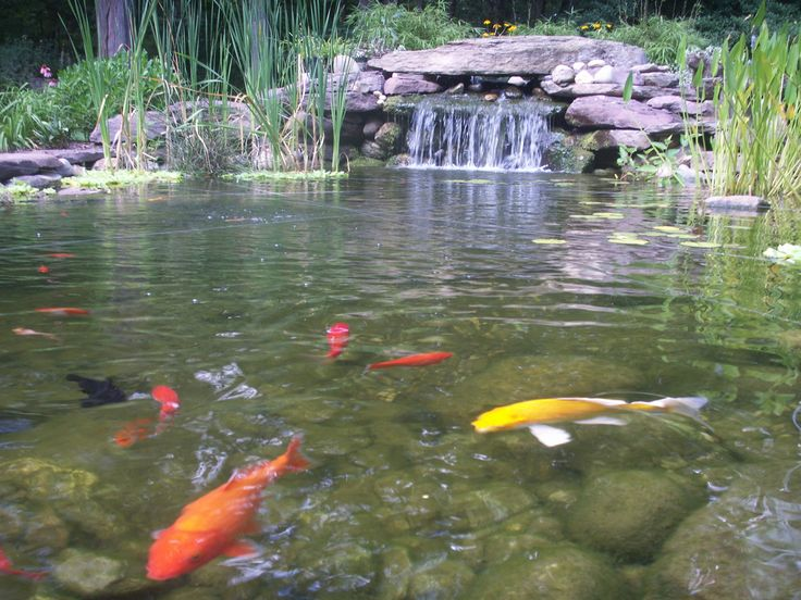 69 best fish ponds images on pinterest backyard ponds for Fish pond waterfall ideas