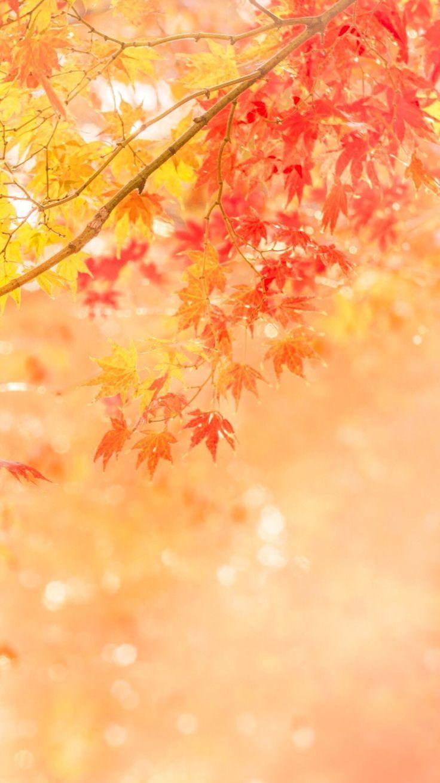 Found On Bing From Www Pinterest Com Desktop Wallpaper Fall Fall Wallpaper Desktop Wallpapers Backgrounds