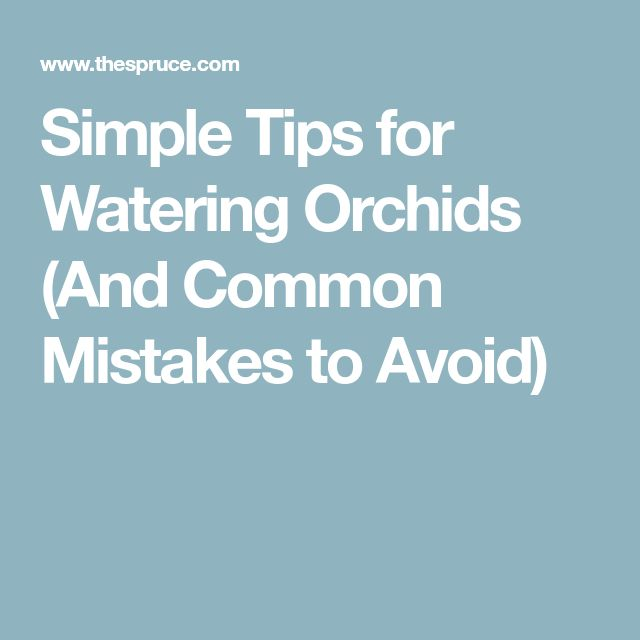 Simple Tips for Watering Orchids (And Common Mistakes to Avoid)