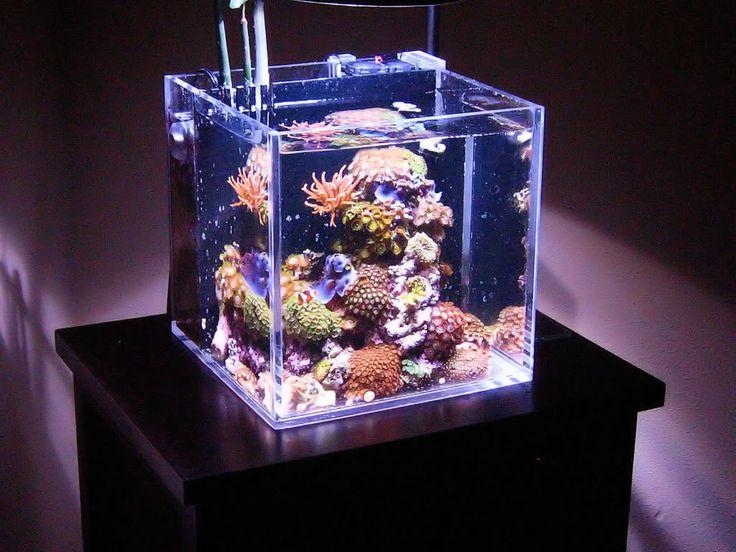 Acrylic Nano Reef Aquarium - interesting design