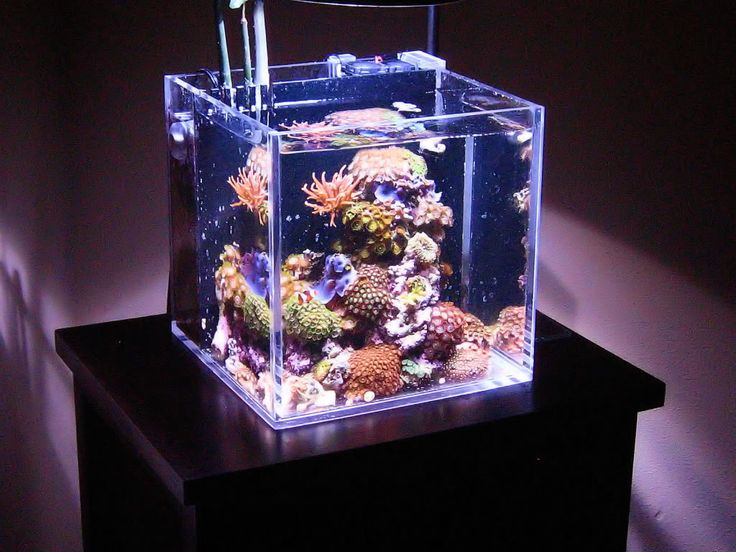 67 best images about nano reef on pinterest saltwater for Aquarium recifal nano