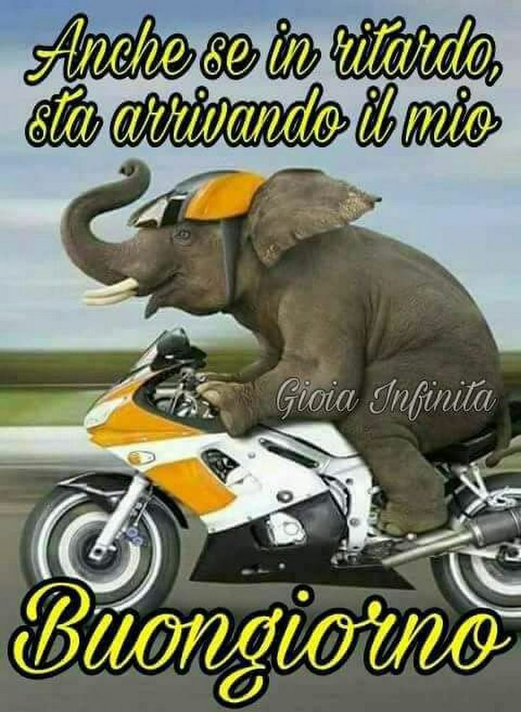 3181 best buongiorno buonanotte images on pinterest for Immagini divertenti buongiorno venerdi