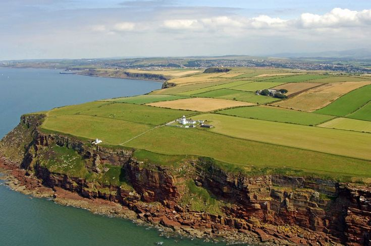 st bees - Google Search