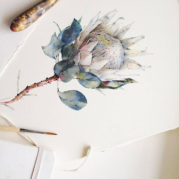 Protea watercolor. Flowers sketchbook by Katerina Pytina on Behance. Watercolor botanical.