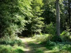 Traversé par les rivières Scarpe et Escaut, le Parc Naturel Régional Scarpe-Escaut s'étend sur 43 000 hectares. La forêt de Raismes-Saint- Amand-Wallers, propice à la balade, la station thermale de Saint-Amand-les-Eaux comptent parmi les lieux à découvrir.