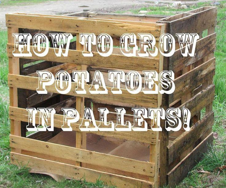pallet garden container 1