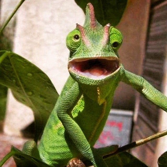 Mystically Amazing Facts About Lizards