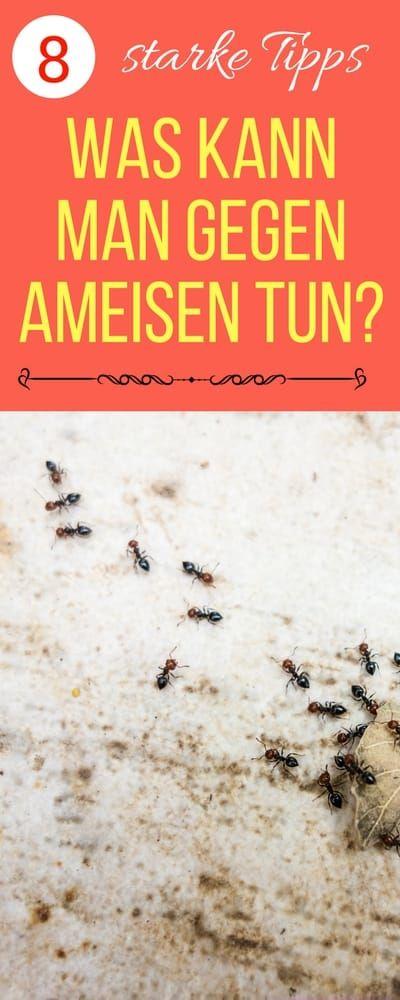 Vintage Ameisen im Haus bek mpfen Haushaltsfee org