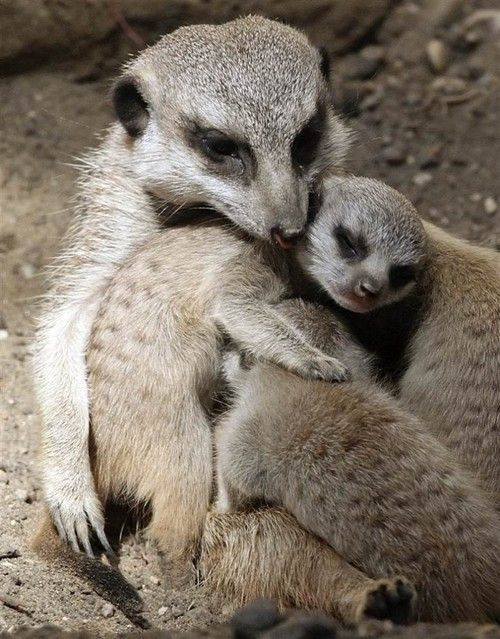 17 Best images about Beautiful Animal Photo's on Pinterest | Zoos ...
