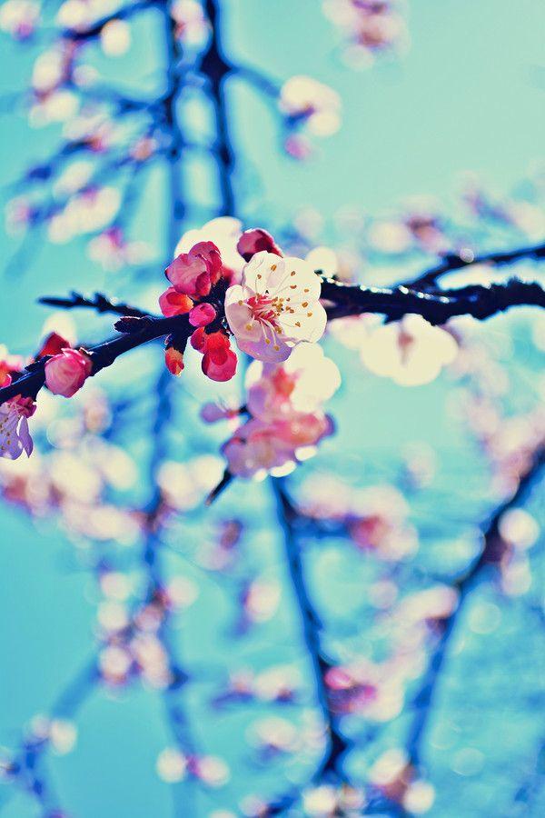 spring.. inside by Stefania Salvadori on 500px