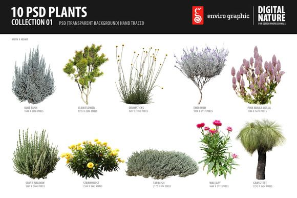 Check out 10 PSD Plants Collection 1 by envirographic on Creative Market