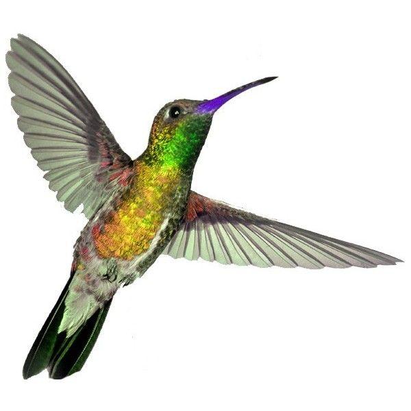 pin pamela mcleod birds
