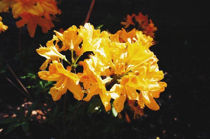 Nezahat Gökyiğit Botanik Bahçesi http://yoldanciktim.com/geziler/sehir-gezileri/istanbul/nezahat-gokyigit-botanik-bahcesi/