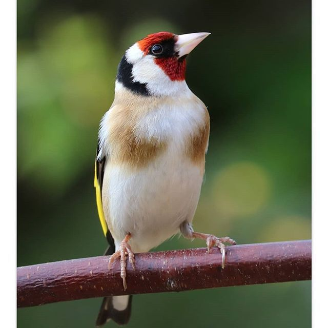 39+ Oiseaux chanteurs de nos jardins ideas