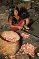 Indígena Waunana pelando semillas de chigua.