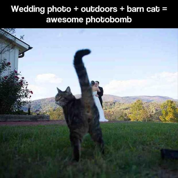 Best PHOTO BOMBS Images On Pinterest Funny Animals Funny - 35 hilarious animal photobombs ever