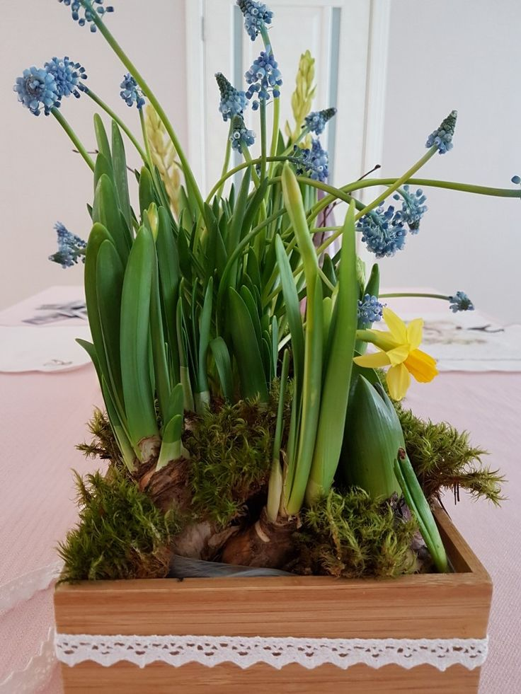 Sweet spring bouquet for table  decorating