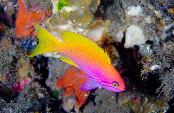 Bright Neon Fish Vibrant Colors Pinterest Neon