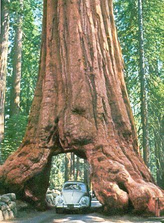 Yosemite NP, California, USA