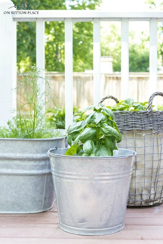 Grow your own herbs with these container herb garden ideas. Easy tips for getting a big harvest from a small amount of space. #herbalife #gardening #gardenideas #gardens #containergardening #basil #mint #tomatoes