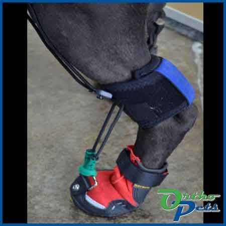 Biomechanically correct orthotics and prosthetics for dogs and other animals. Dog knee braces, hock, wrist and paw orthotics and adaptive devices such as hobble and wheelie vests.