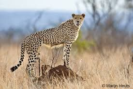 Image result for africa nature