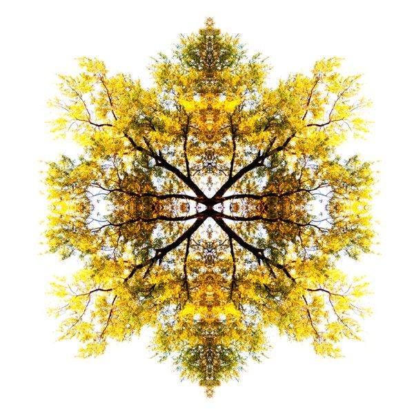 Sunshine tree Paul Cook and his Universe, Mondo Curio | Trendland: Fashion Blog & Trend Magazine