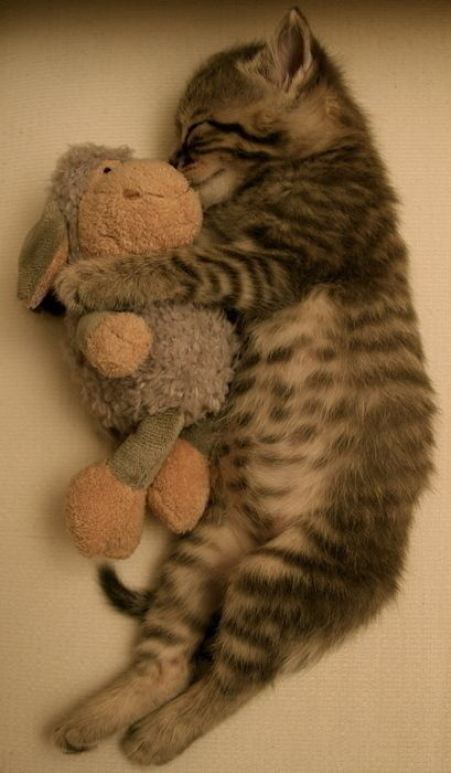 .Snuggles, Stuffed Animals, Friends, Sweets, My Heart, Cuddling Buddy, Sleep, Baby Cats, Cute Kittens