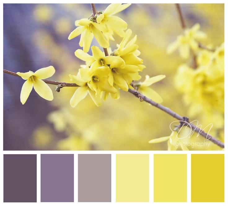 Yellow Gray Mauve Color Scheme Room